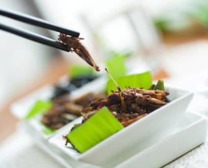 Commande tes insectes pour l'apéro avec Insectescomestibles !