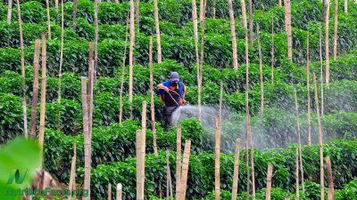 La détection des pesticides avec Scan Eat